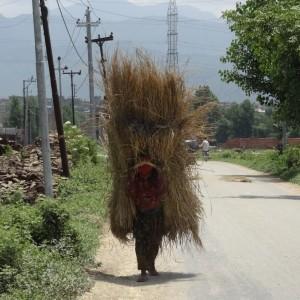 20130525_Nagarkot_Bhaktapur_Kathmandu_Changu_Narayan_022