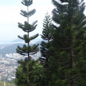20130705_Malaysia_Penang_Hill_018