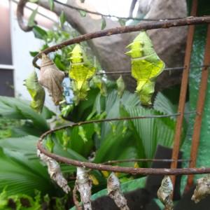 20130707_Penang_Butterfly_Farm_001
