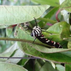 20130707_Penang_Butterfly_Farm_006