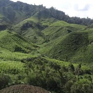 20130709_10_Malaysia_Cameron_Highlands_032