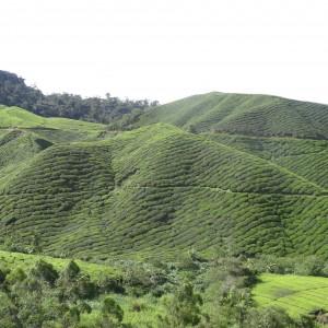 20130709_10_Malaysia_Cameron_Highlands_033