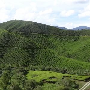 20130709_10_Malaysia_Cameron_Highlands_034