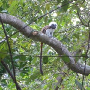 20131128_Tayrona_Nationalpark_139