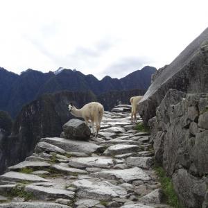 20140109_Machu_Picchu_072