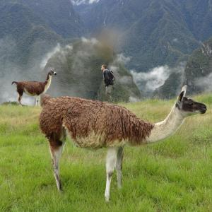 20140109_Machu_Picchu_105