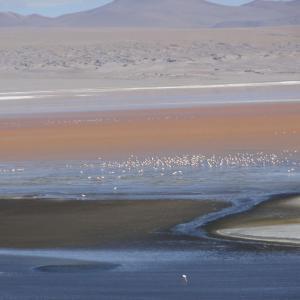 20140119_Parque_Eduardo_Laguna_Colorada_Avaroa_Flamingos_012