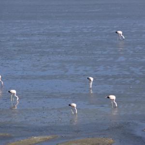 20140119_Parque_Eduardo_Laguna_Colorada_Avaroa_Flamingos_018