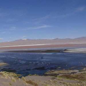20140119_Parque_Eduardo_Laguna_Colorada_Avaroa_Flamingos_019