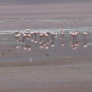 20140119_Parque_Eduardo_Laguna_Colorada_Avaroa_Flamingos_024