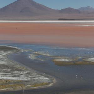 20140119_Parque_Eduardo_Laguna_Colorada_Avaroa_Flamingos_028