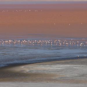 20140119_Parque_Eduardo_Laguna_Colorada_Avaroa_Flamingos_030