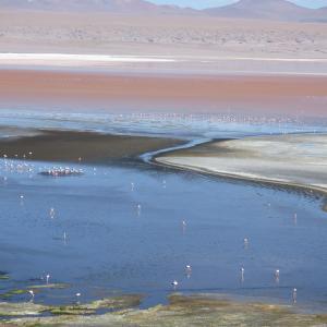 20140119_Parque_Eduardo_Laguna_Colorada_Avaroa_Flamingos_046